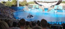 Orca stirbt in Freizeitpark SeaWorld