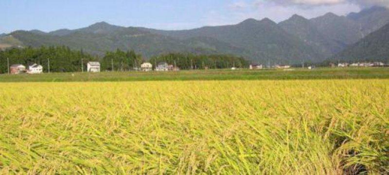 Erhöhte Strahlenwerte in Reis